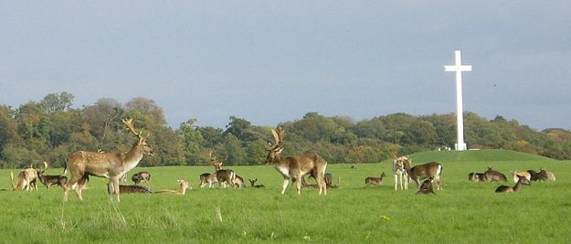 A herd of deer by the Papal Cross