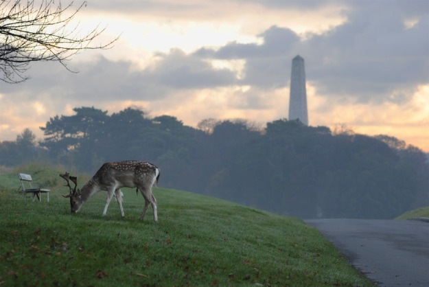 Deer still live in Phoenix Park today.