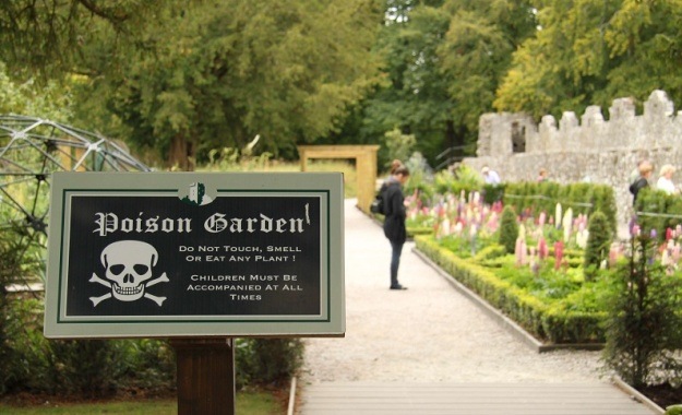 The grounds of Blarney Castle include a Poison Garden, wherein are grown all the traditional poisons - tobacco, wolfsbane and castor oil. Photo by Richard Tulloch